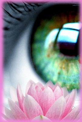 L'oeil du lotus